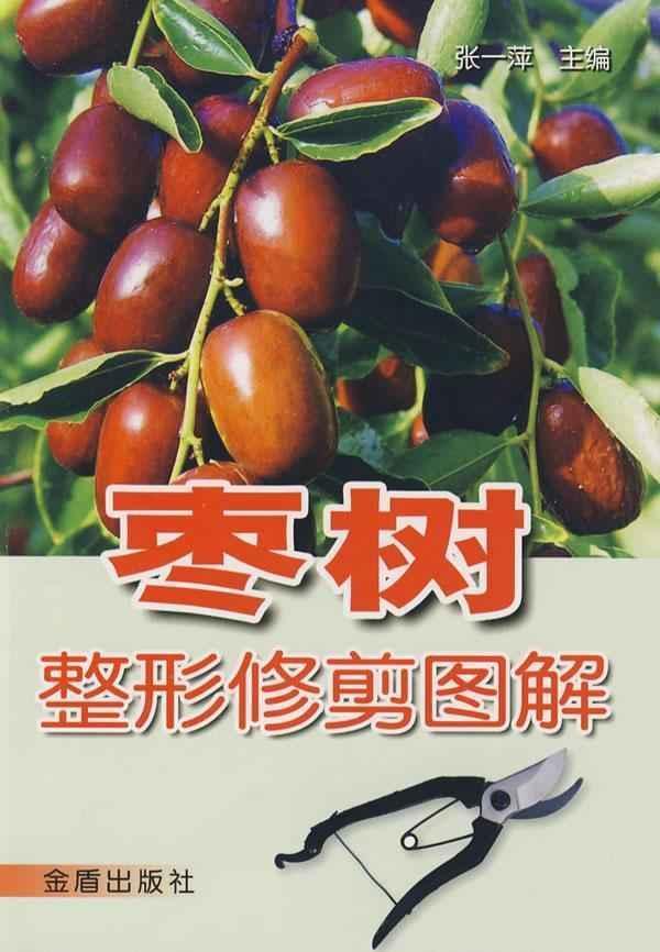 枣树整形修剪图解_360百科